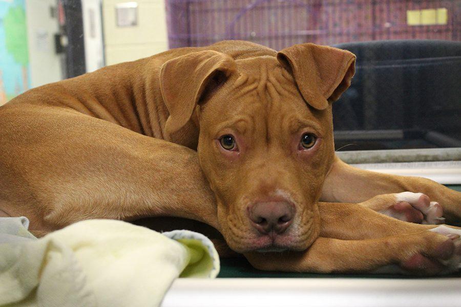SPCA Fetches Hurricane Harvey Survivors