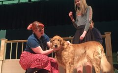"Canine Actors Break a Paw in ""Legally Blonde"""